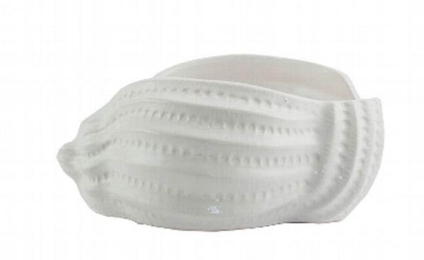 Muschel Kuga 26 cm