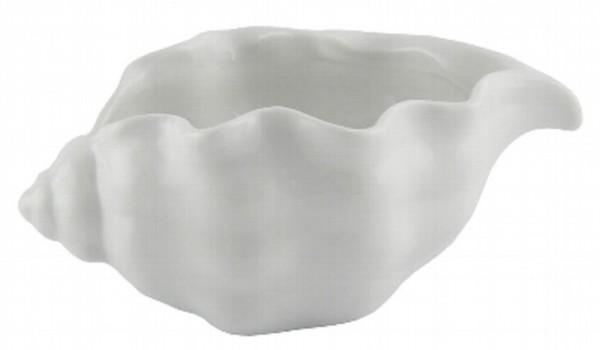 Muschel Riccio, 7.5 cm